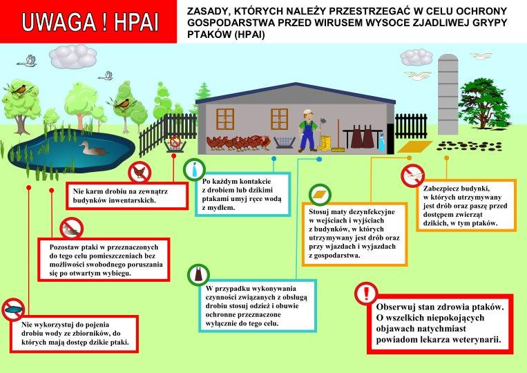 HPAI infografika